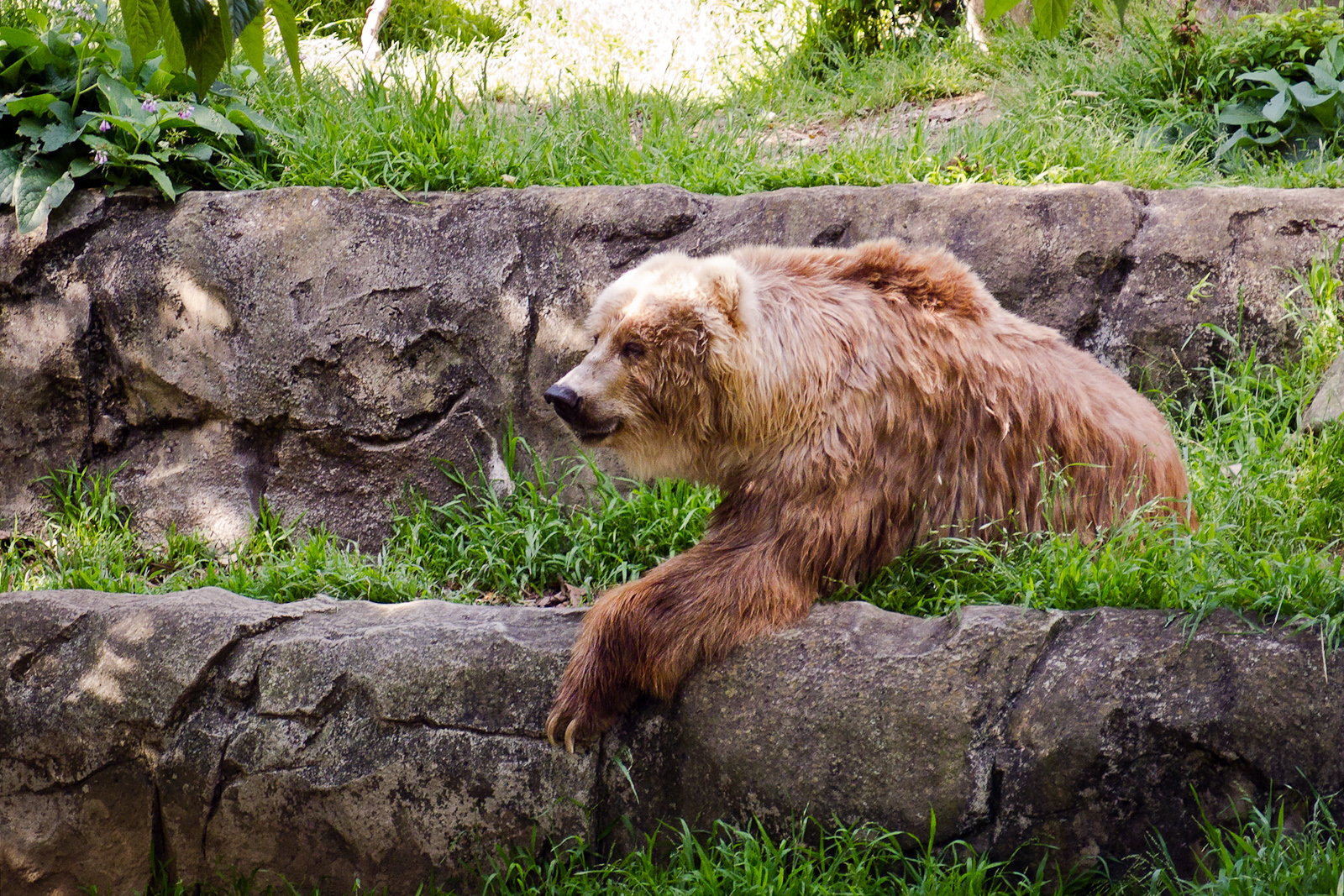 The Sad Bear