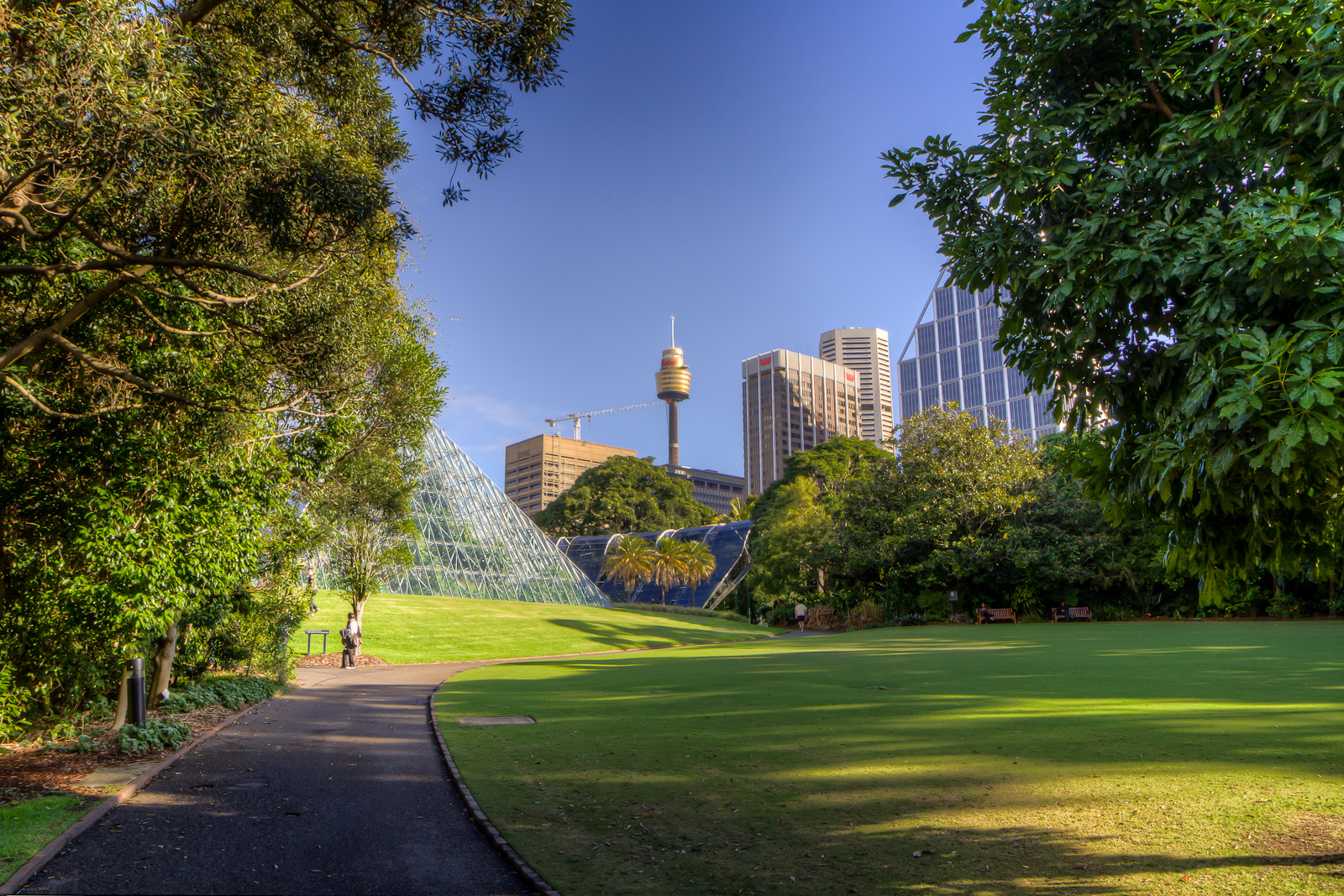 Centrepoint from the Botanic Gardens