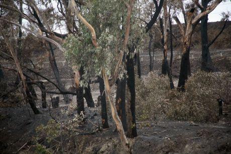 vic_bushfire