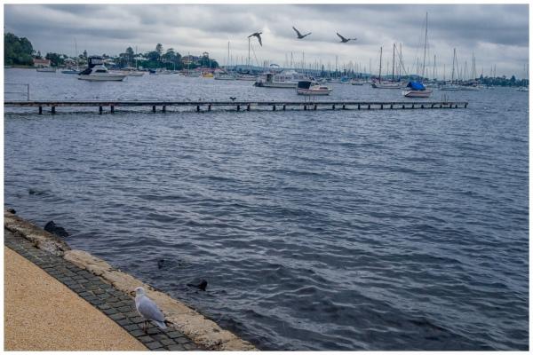 Seagull by the Wharf