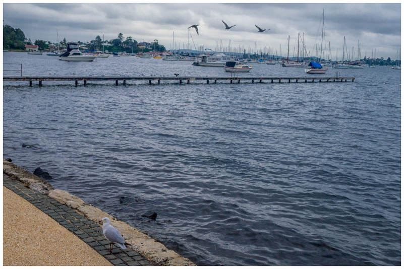 Seagull by the Wharf
