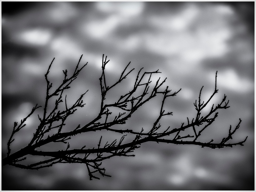 Branch Against the Sky