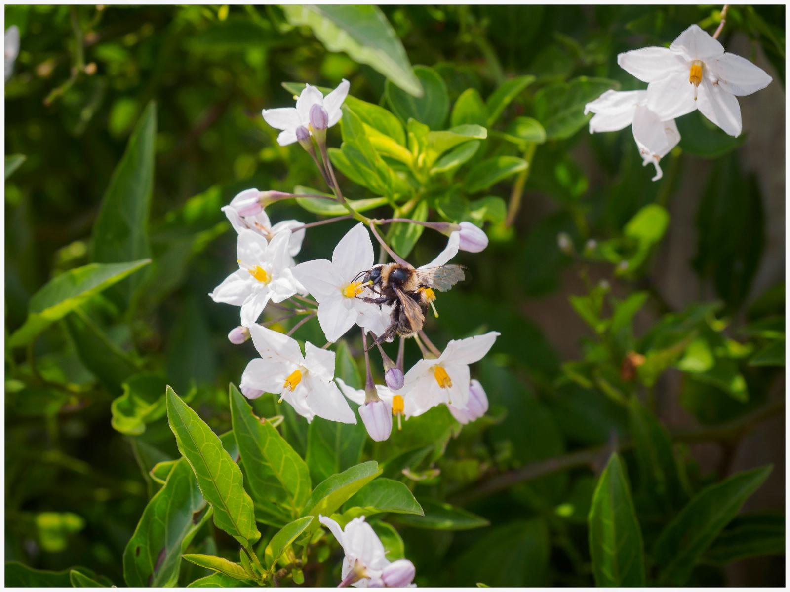 Bumblebee in Hobbiton