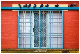 Pigeons above the gate