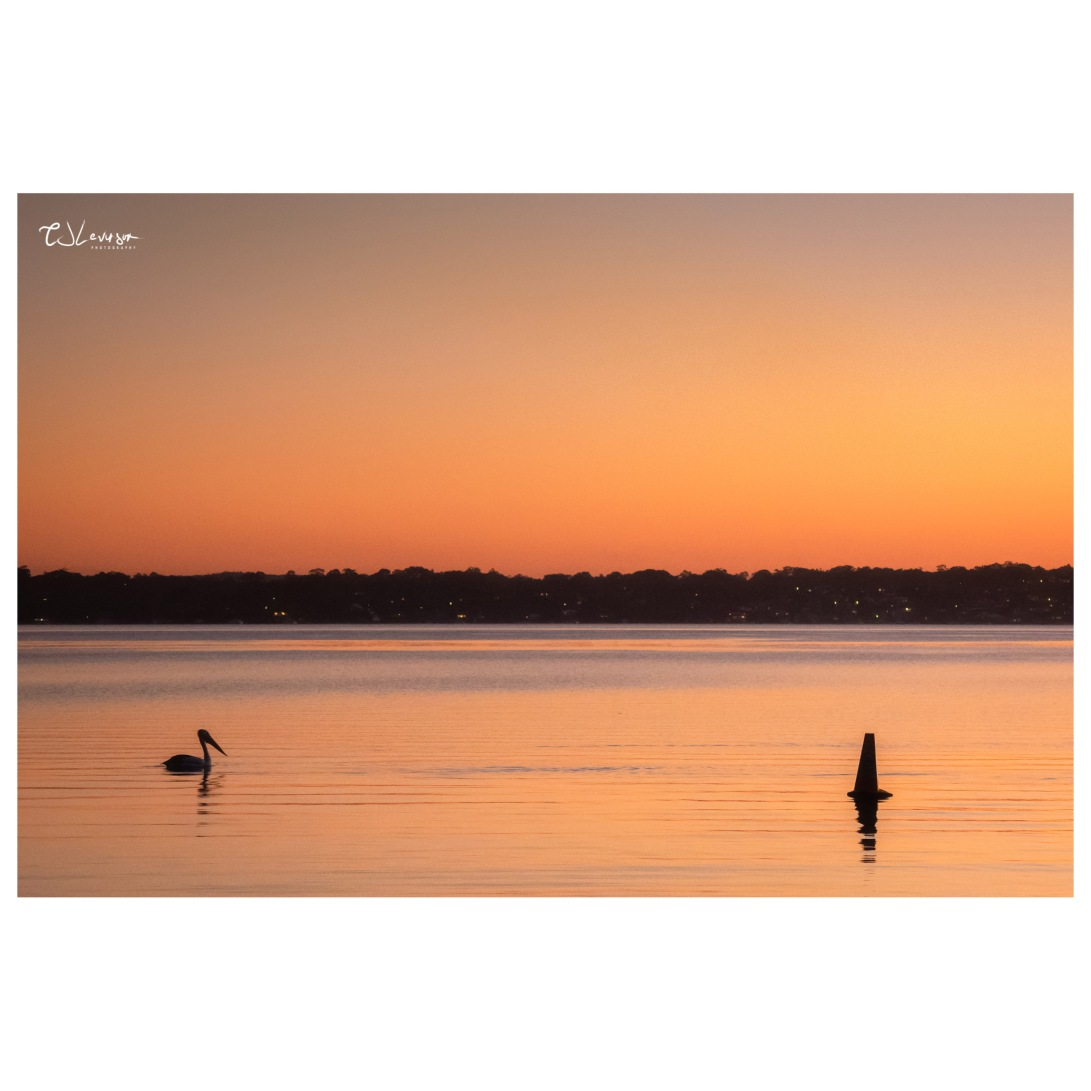 Pelican on the Lake at Dusk (square)